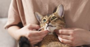 Teen girl with sad abyssinian cat on knees sitting on couch. Wide photo Royalty Free Stock Image