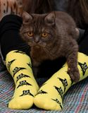Teen girl with sad Scottish cat on knees sitting on couch. Yellow socks with black Batman pattern. Front view. Teen girl with sad Scottish cat on knees sitting royalty free stock photography