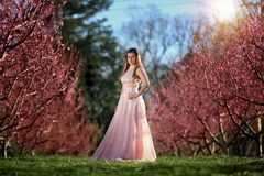 Teen girl in a field of cherry blossoms stock photography