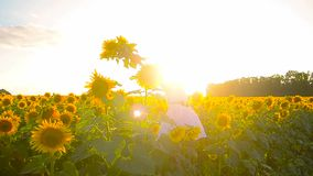 Teen girl in a sunflower field, cheerful girl is holding yellow flowers sunflower. stock video footage