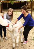 Teen girls with white calf feeding him with mild bottle Royalty Free Stock Photography
