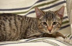 Teen kitten 3 months Stock Photo