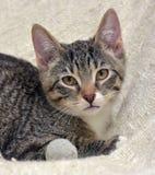 Teen kitten 3 months Stock Image