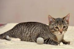 Teen kitten 3 months Stock Images