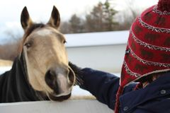 Teen petting the horse. Horse in winter blanket outside in paddock royalty free stock images