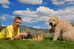 Teen plays chess with dog. Teens plays chess with his dog outside Stock Photos