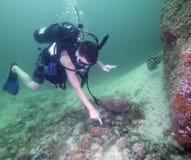 Teen Scuba Diver - Identifies Sea Cucumber Royalty Free Stock Photo