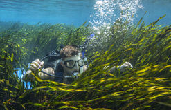 Teen Scuba Diver - Surfaces In Tape Grass. A 14-year old boy scuba diver pops up through an expansive field of tape grass in the clear freshwaters of Blue Stock Images