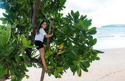 Teen climbing tree at the beach royalty free stock images