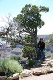 Teen in tree. Teen boy sitting in a tree at the Grand Canyon. Shot with Canon 20D royalty free stock images