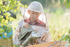 Teenage beekeeper inspecting commercial bee yard Stock Photos