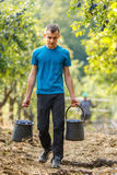 Teenage boy carrying buckets of plums Royalty Free Stock Photo