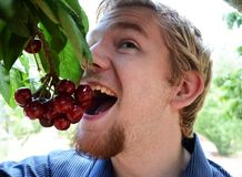 Teenage Boy Eating Cherries off of a Tree Stock Images