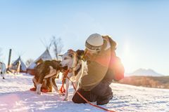 Teenage boy with husky dog. Teenage boy having a cuddle with husky sled dog in Northern Norway stock images