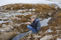 Teenage Boy photographing Sea Life in Tidal Pool. Long Beach, Pacific Rim National Park, Vancouver Island, British Columbia, Canada Royalty Free Stock Images