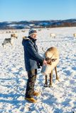 Teenage boy with reindeer. Teenage boy feeding a reindeer on sunny winter day in Northern Norway royalty free stock images