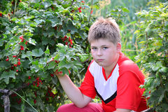 Teenage boy sitting near a red currant in  garden Stock Photo