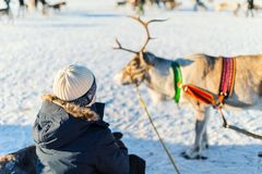 Reindeer safari Royalty Free Stock Photos