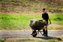 Teenage Chore. A teenage boy pushing a wheelbarrow full of hay down a country road wearing mud boots. Shallow depth of field royalty free stock photography