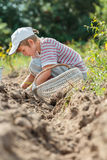 Teenage farmer at root vegetables harvesting Stock Photos