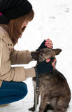 Teenage girl caressing abandoned dog Royalty Free Stock Image