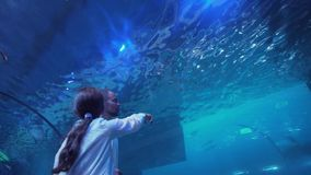 Teenage girl with Dad watching the fish in Aquarium stock footage video. Teenage girl with Dad watching the fish in the Aquarium stock footage video stock video footage