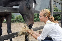 Teenage girl feeding horse Stock Images