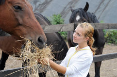 Teenage girl feeding horses Royalty Free Stock Photography