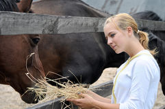 Teenage girl feeds horse Royalty Free Stock Image