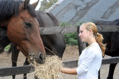 Teenage girl feeds horse Royalty Free Stock Photography