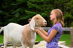 Teenage Girl with her Goat Stock Images