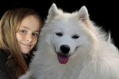 Teenage girl and her samoyed dog. Portraits of a teenage girl and a young samoyed  dog, The happy girl smiles and it looks as if  the dog laughs too royalty free stock photo