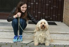 Teenage girl and her sweet little tiver dog. Teenage girl and her sweet little furry tiver dog sitting in front of a door. Tiver is a new german dog breed stock image