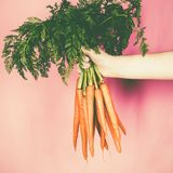 Bunch of fresh carrots in the hand Royalty Free Stock Images