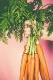 Bunch of fresh carrots in the hand Stock Images