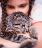 Teenage girl with kitten Royalty Free Stock Photo