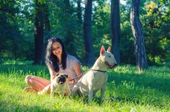 Teenage girl playing with dogs in summer nature royalty free stock images