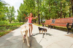 Teenage girl with running away dogs. Teenage girl with two naughty dogs on a walk with pets running away off the leash royalty free stock image