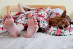 Teenage girl`s feet on bed and dog stock photos