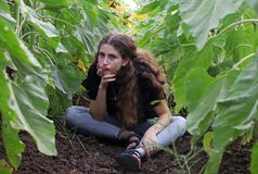 A teenage girl and sunflowers. A teenage girl is sitting in a sunflower field royalty free stock photography