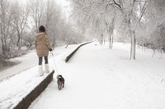 Teenage girl walks the dog in the snow Royalty Free Stock Photo