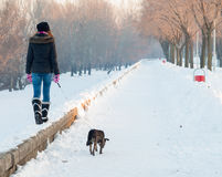 Teenage girl walks the dog snowy day Royalty Free Stock Image
