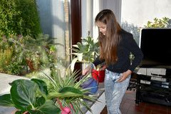 Girl watering the houseplants. Teenage girl watering the flowers, helps in  the household Royalty Free Stock Photography