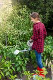 Young teenage girl working in garden and watering vegetables from big watering can Stock Photos