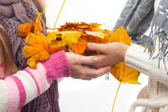 Teenage girls hold colorful autumn leaves. Teenage girls wearing sweaters and scarfs hold colorful autumn leaves in their hands Stock Photo