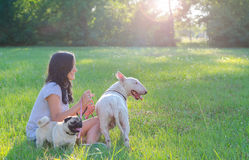 Teenage girls sitting with her dogs on summer meadow Stock Photo