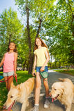 Teenage girls walking dogs and chatting. Close portrait of two happy teenage girls walking their golden retriever dogs in the park and chatting royalty free stock photo