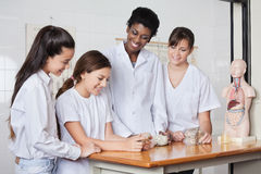 Teenage Schoolgirls With Teacher Analyzing Stones Stock Photography