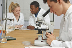 Teenage Students In Science Class Using Microscope Royalty Free Stock Image