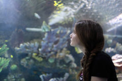 Teenager at aquarium Royalty Free Stock Photography